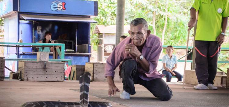 ตื่นเต้น เร้าใจ ไปกับการแสดงโชว์งูจงอาง ที่ 'หมู่บ้านงูจงอาง' บ้านโคกสง่า อ.น้ำพอง จ.ขอนแก่น